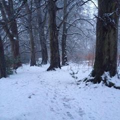 Woodland winter walks